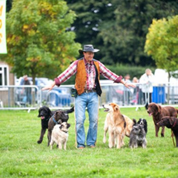 Lloyd Park Festivals of Dogs
